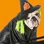 Halloweenutställning 30 Oktober